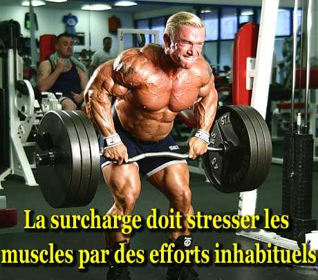 Entrainement en musculation